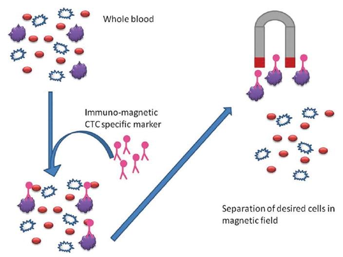 免疫磁珠分選示意圖